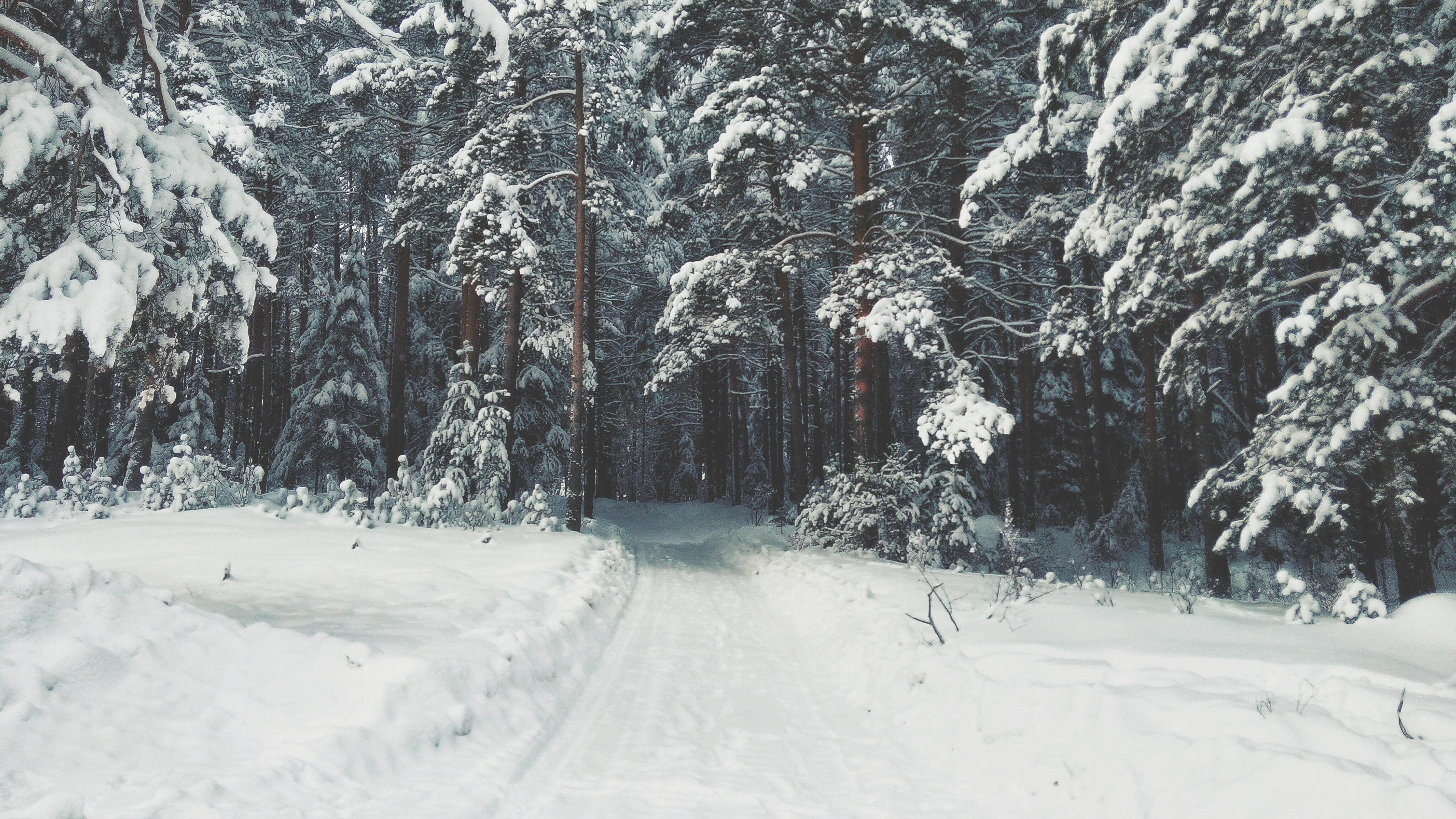 A path in the woods covered in a thick layer of snow