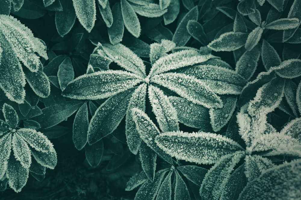 close-up photography of green leaf plant leaves