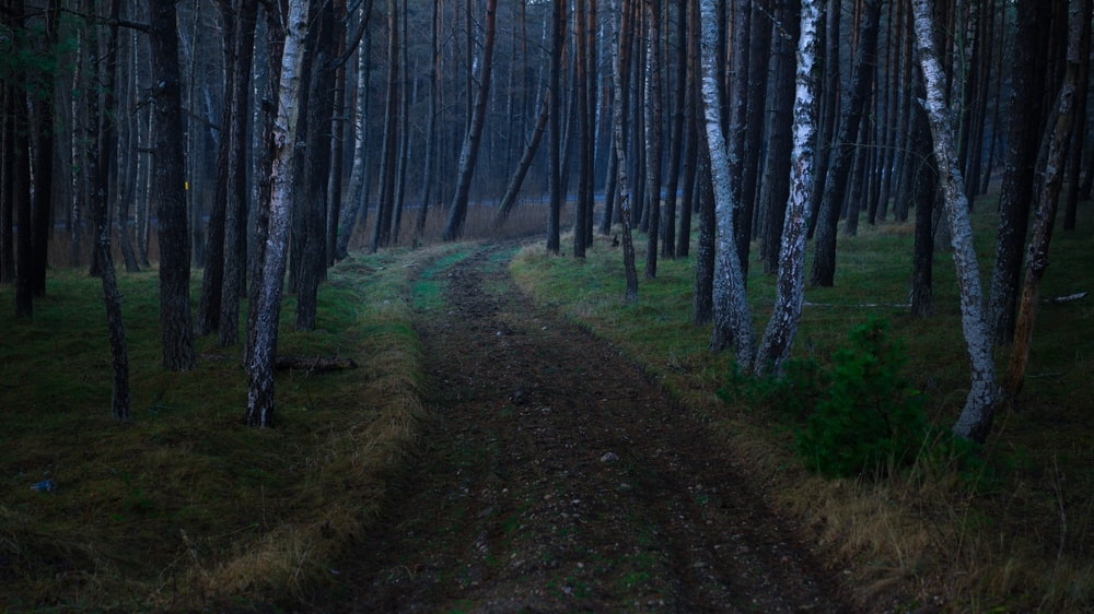 photography of road between trees