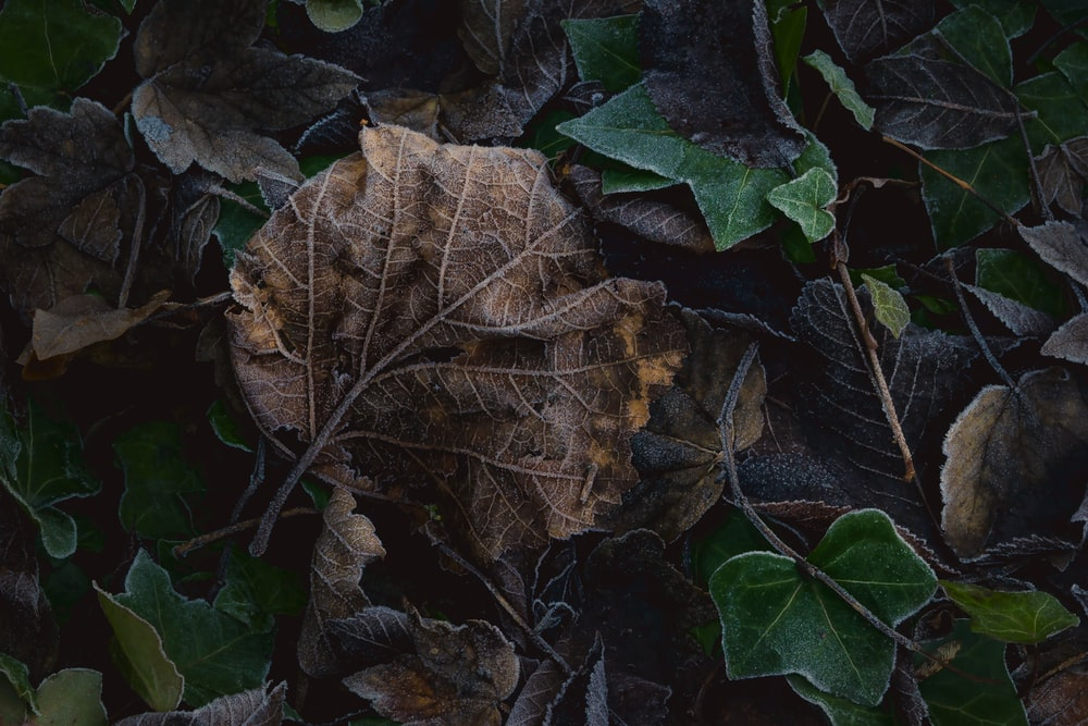brown and green leaf lot