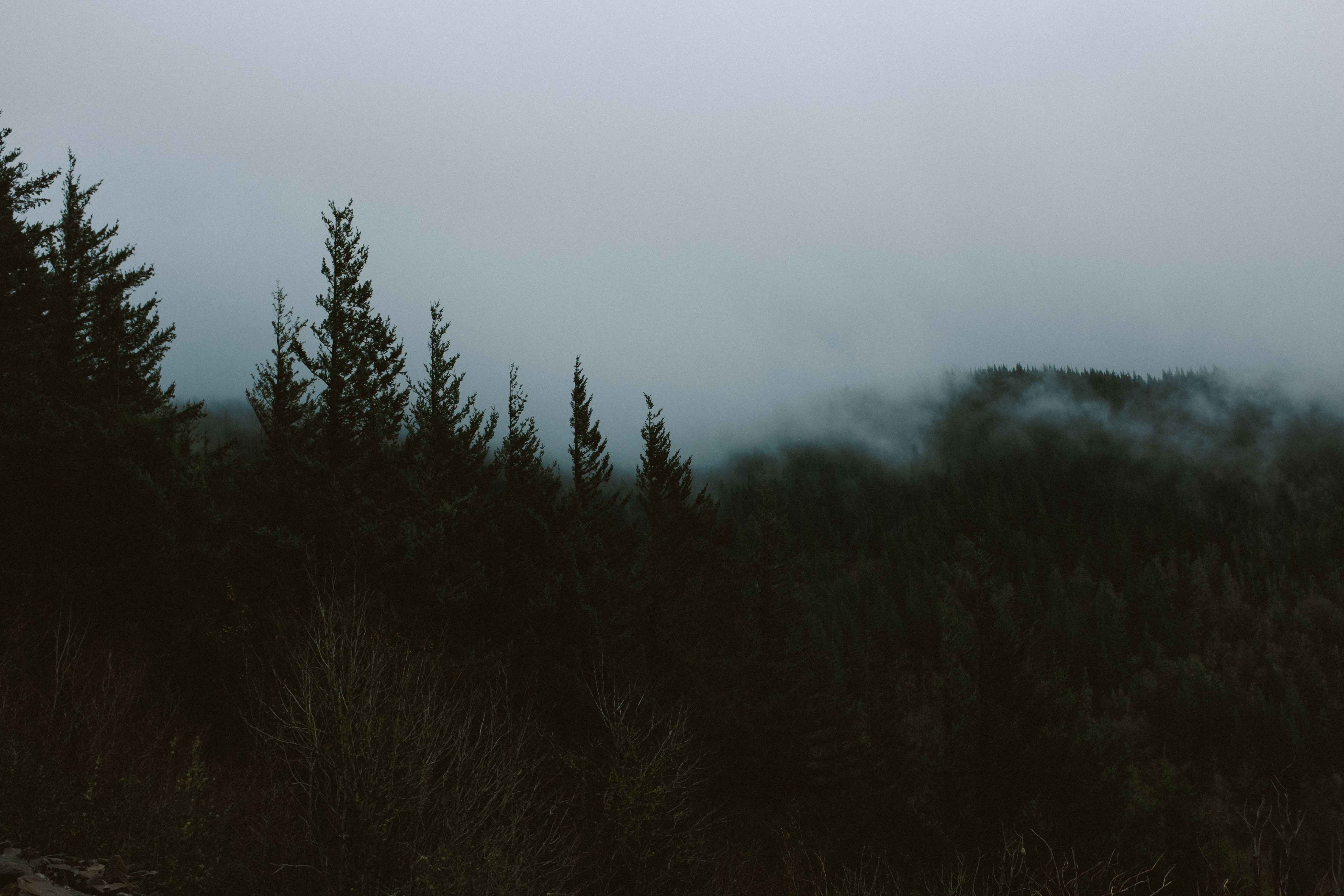 Fog over a dark coniferous forest