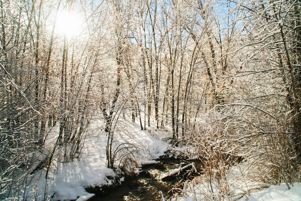 snow-covered bare trees