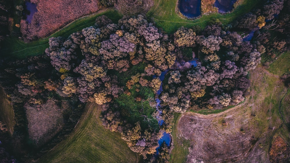 top-view photo of trees