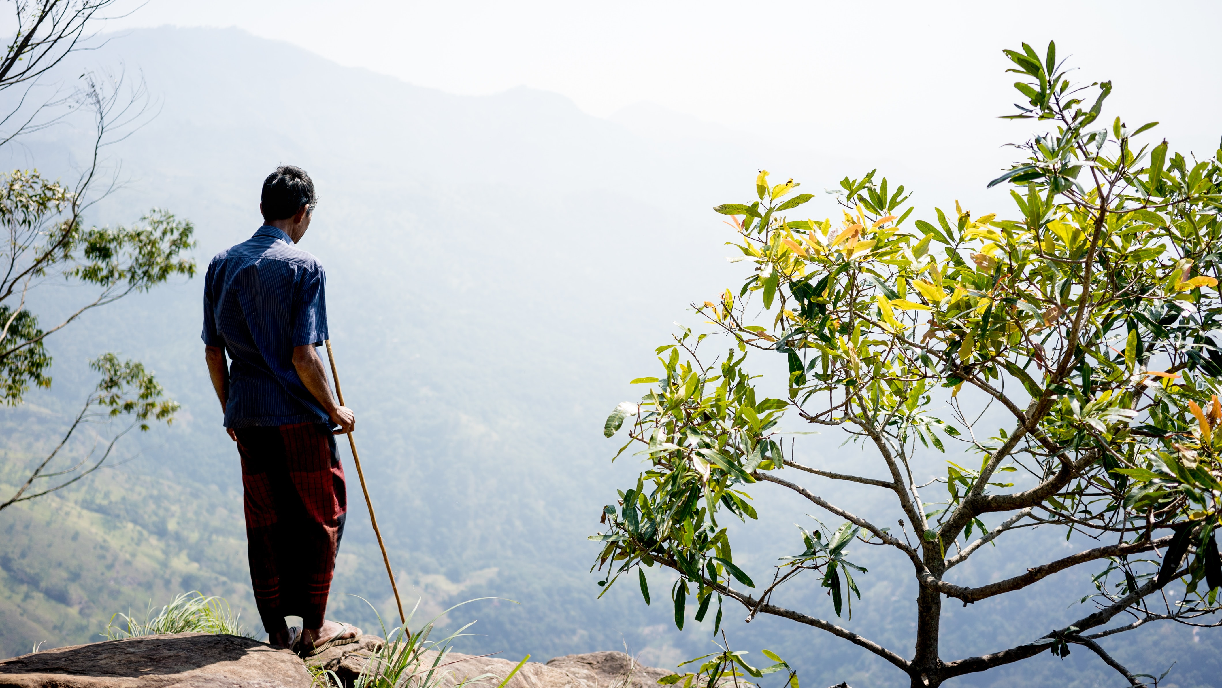 man standing on mountain cliff beside green leaf plant during daytime