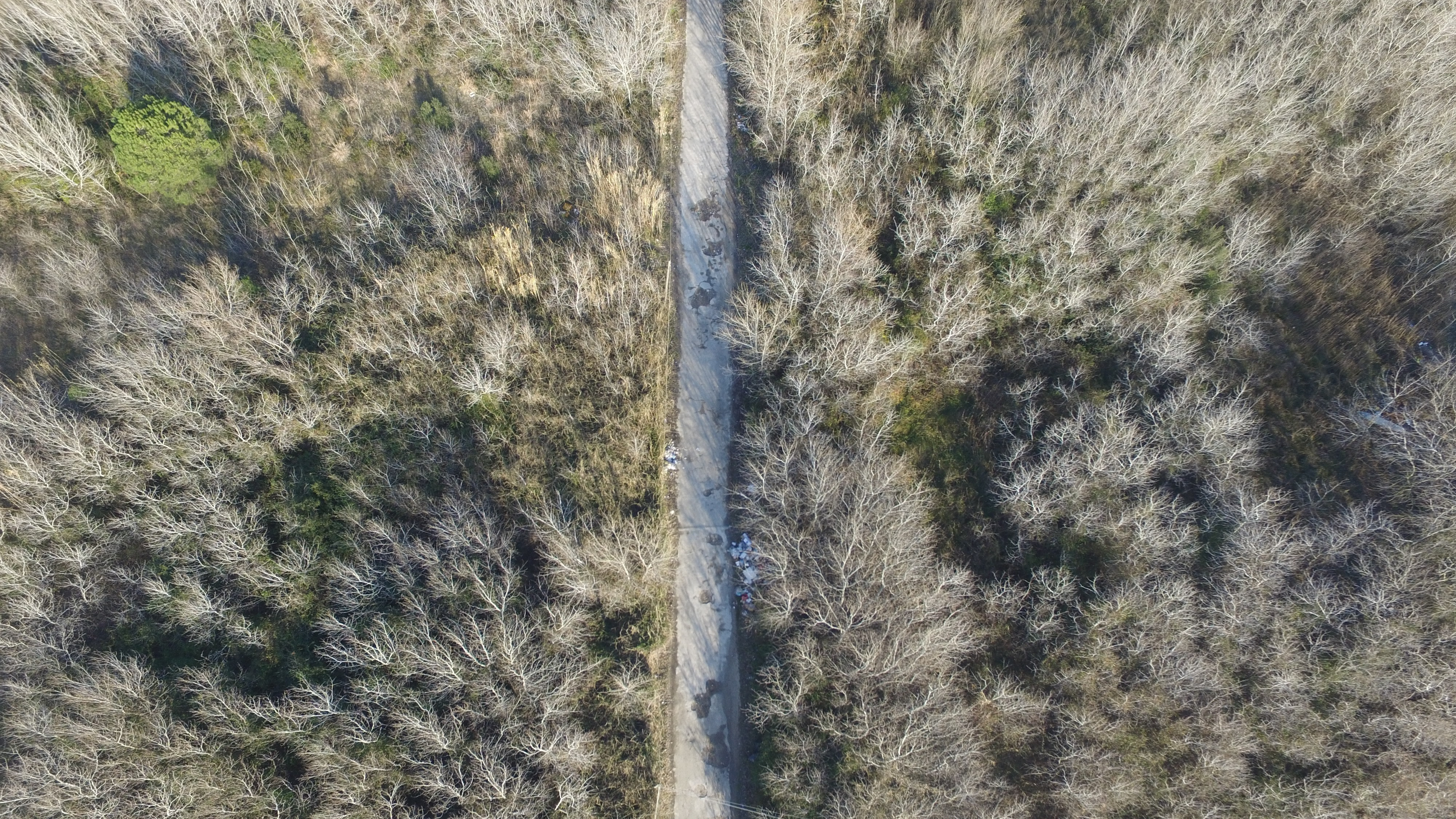 A drone shot of a dilapidated road through a forest in Castel Volturno