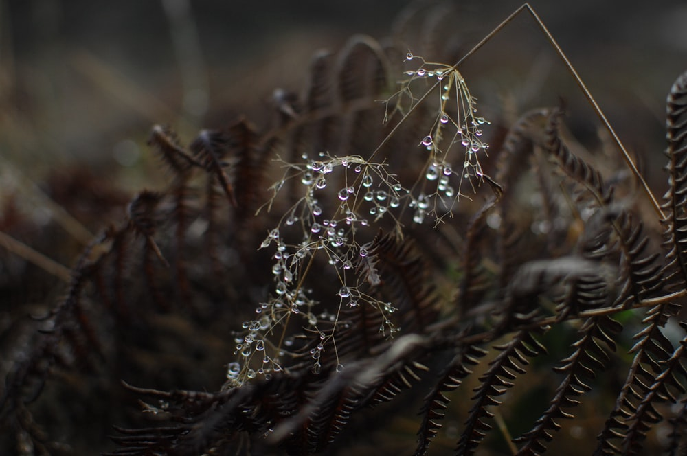 water droplets on plant macro photograpby