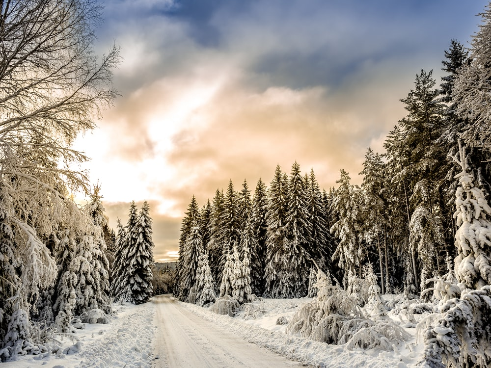 road in between trees covered by snow