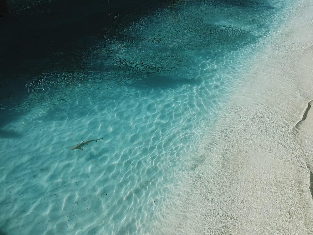 high angle photo of sea with shark