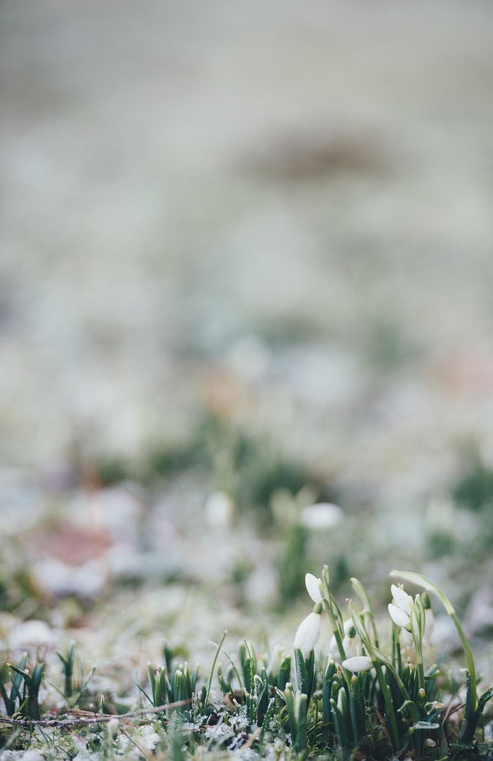 selective focus photo of white flowerbud