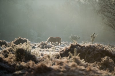 New Forest Pony in the fog