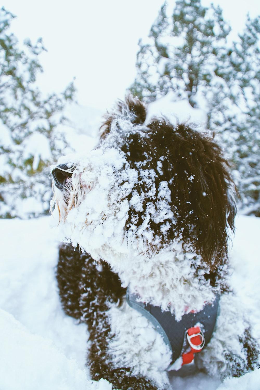 snow-covered animal