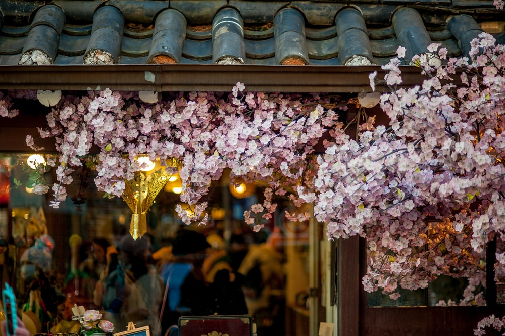pink petaled flowers on roof shingles