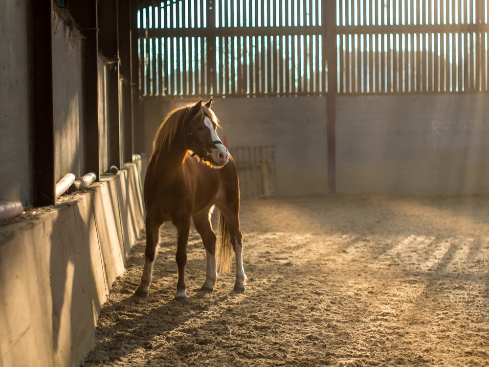 brown and white horse on stable