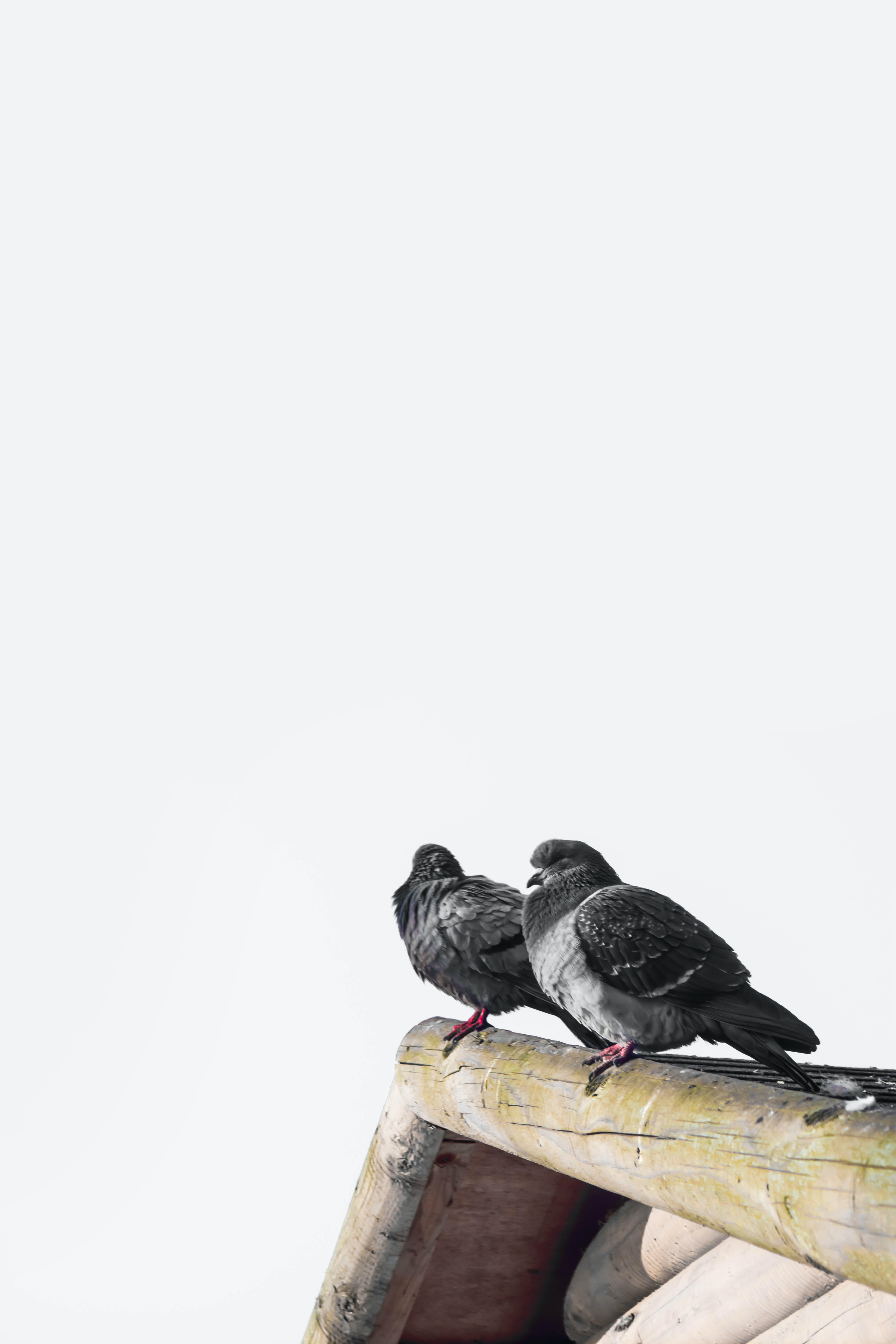 Two birds sitting on a ledge.