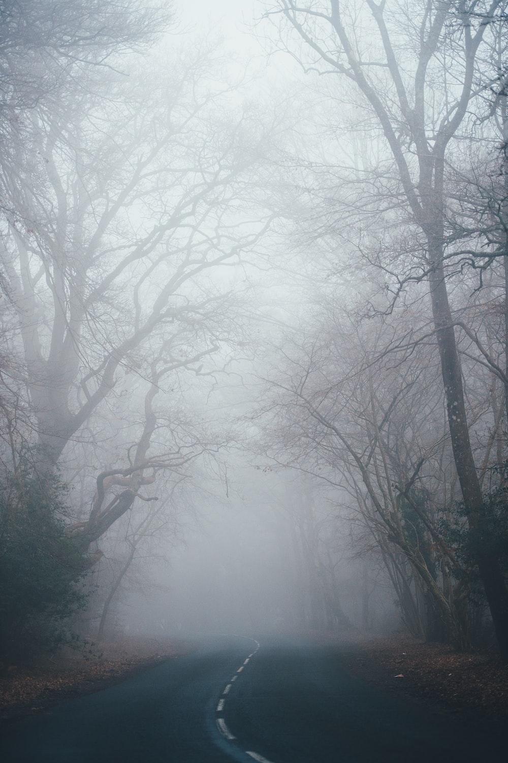 bare tree between road