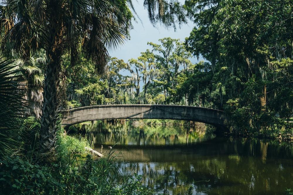 brown concrete bridge near green trees during daytime photo