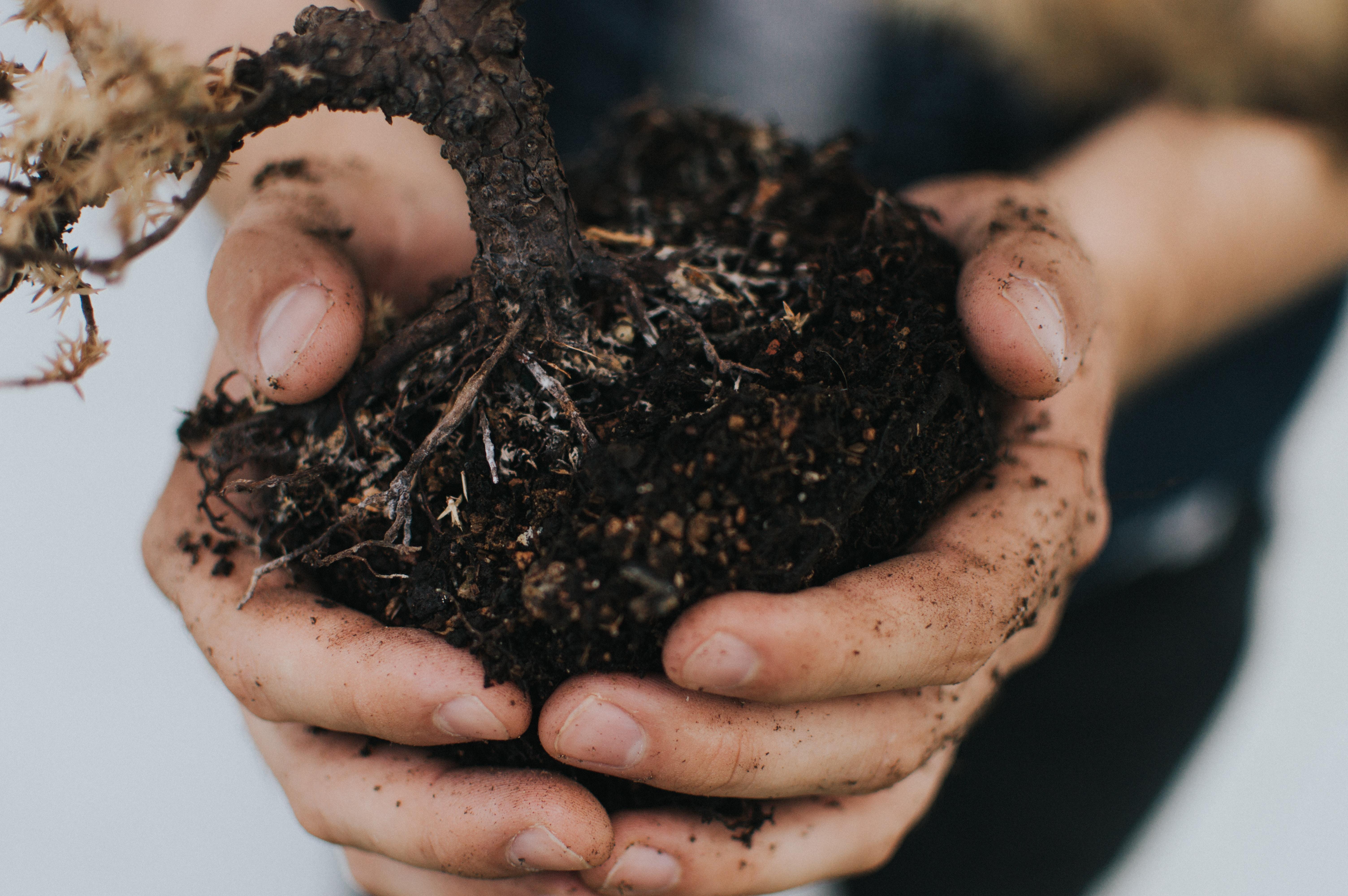 person holding plant stem