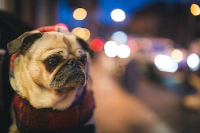 Petunia and the city night lights