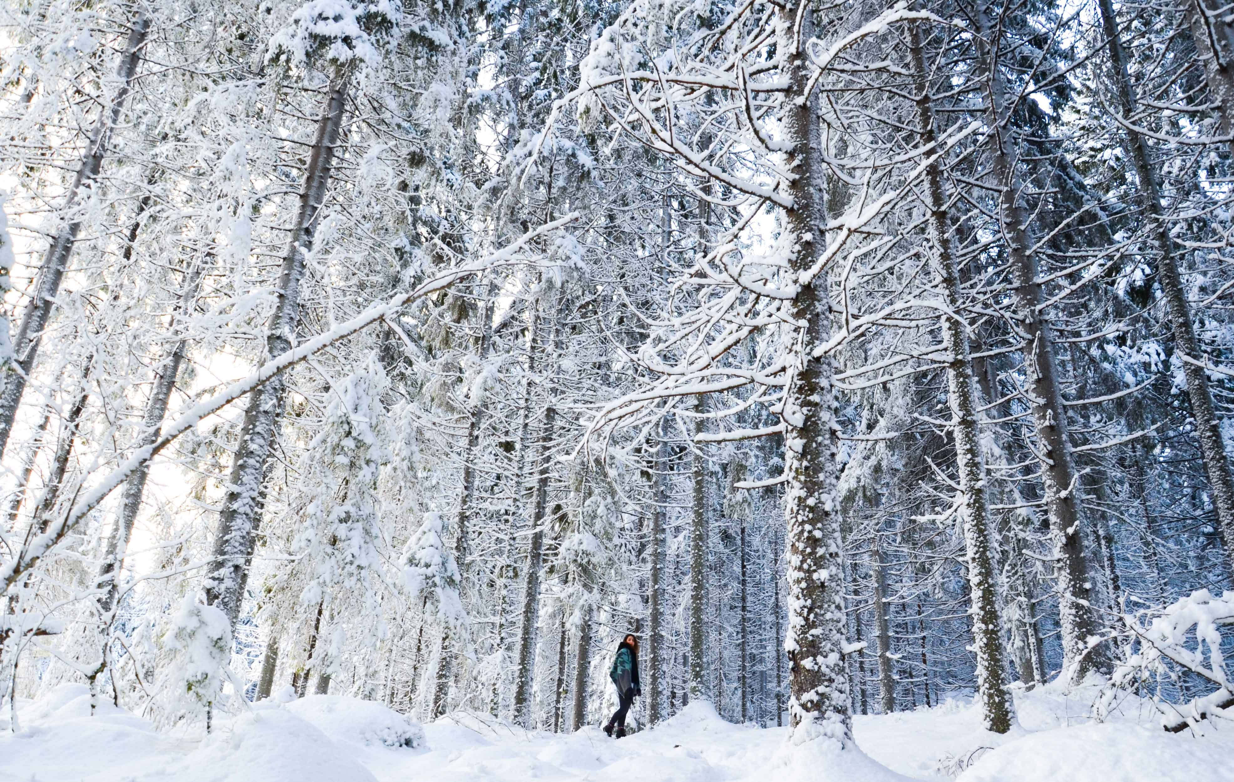 A shot from inside the woods of trees covered in snow in Jyväskylä