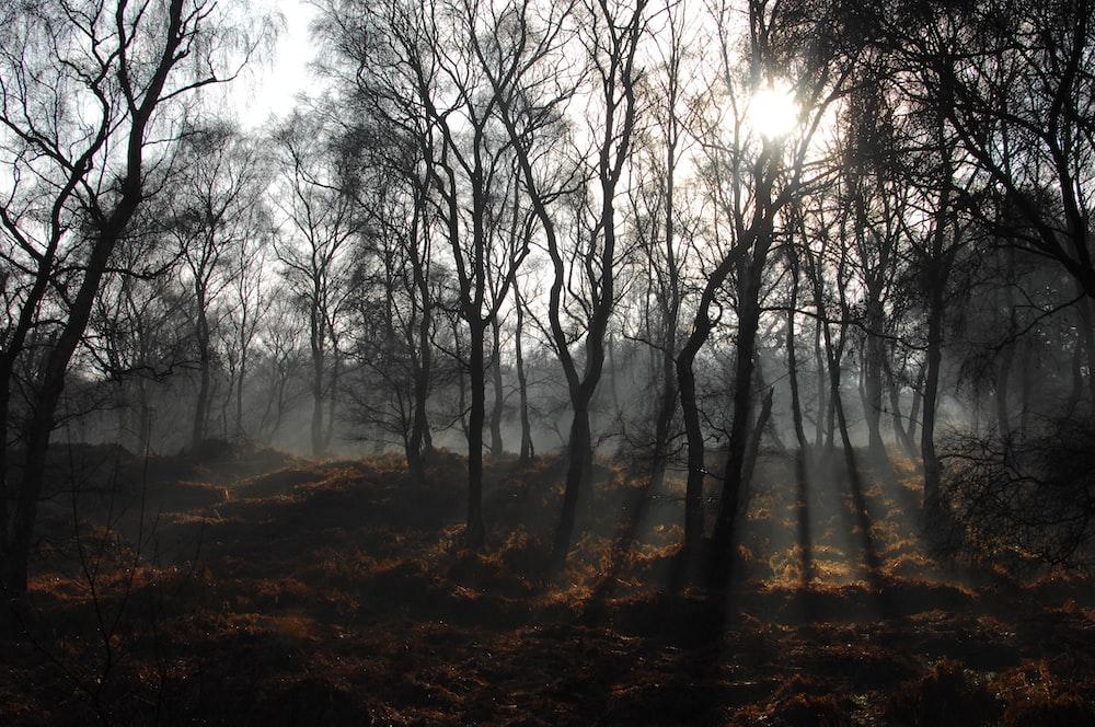 صورة لاحدى الغابات المخيفة