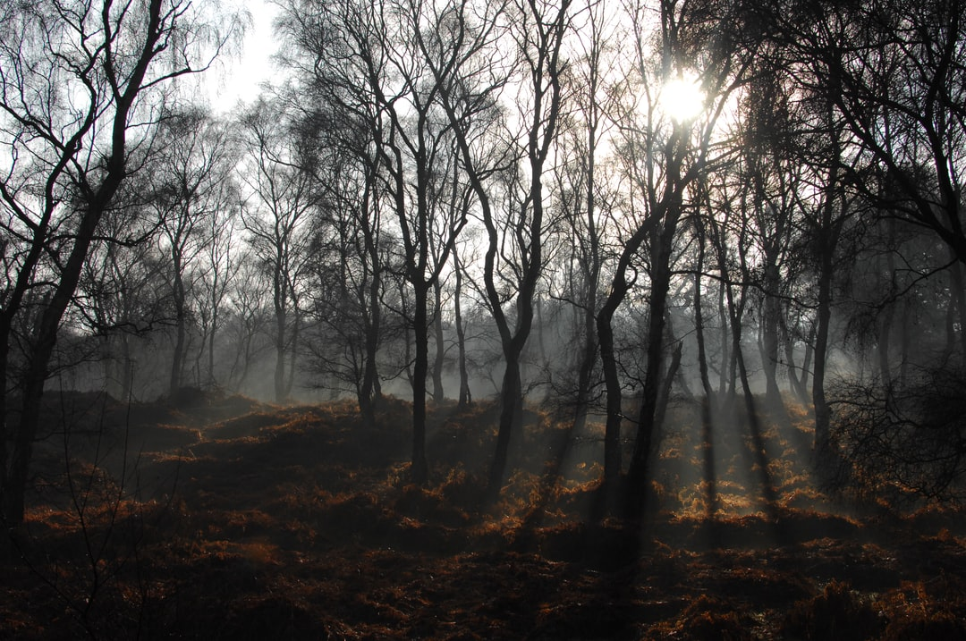 I was feeling overwhelmed with too many to-do lists, so I took myself off for a frosty walk.  I took a slightly different route to usual and came across this clearing where the sunlight was streaming through the skeleton trees highlighting the fog creeping amongst the undergrowth.  This is unedited and straight out of camera.