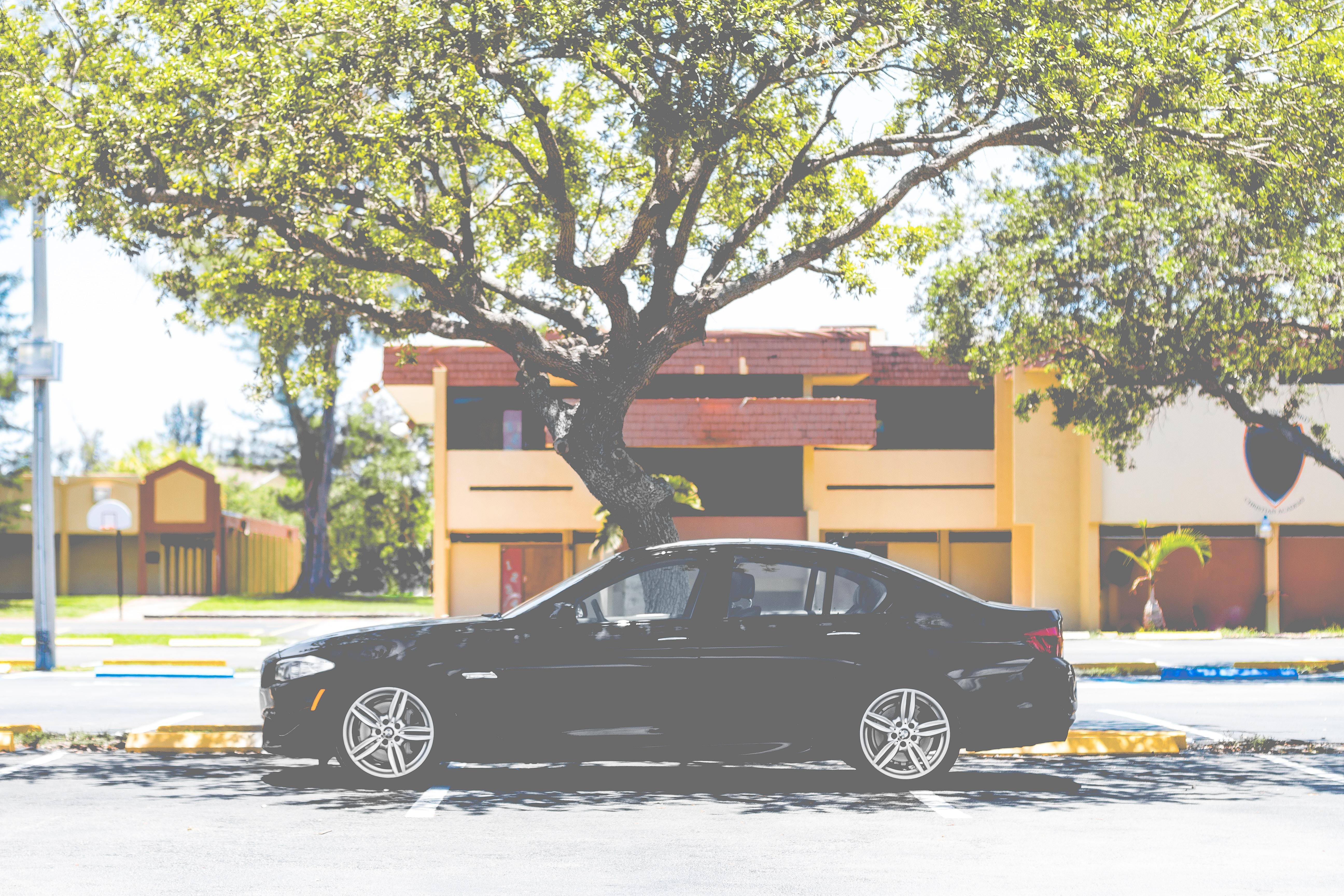 black sedan near tree
