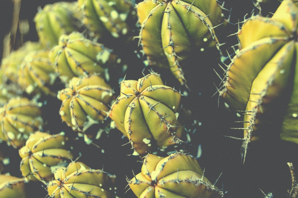 green cactus plant in close-up photography