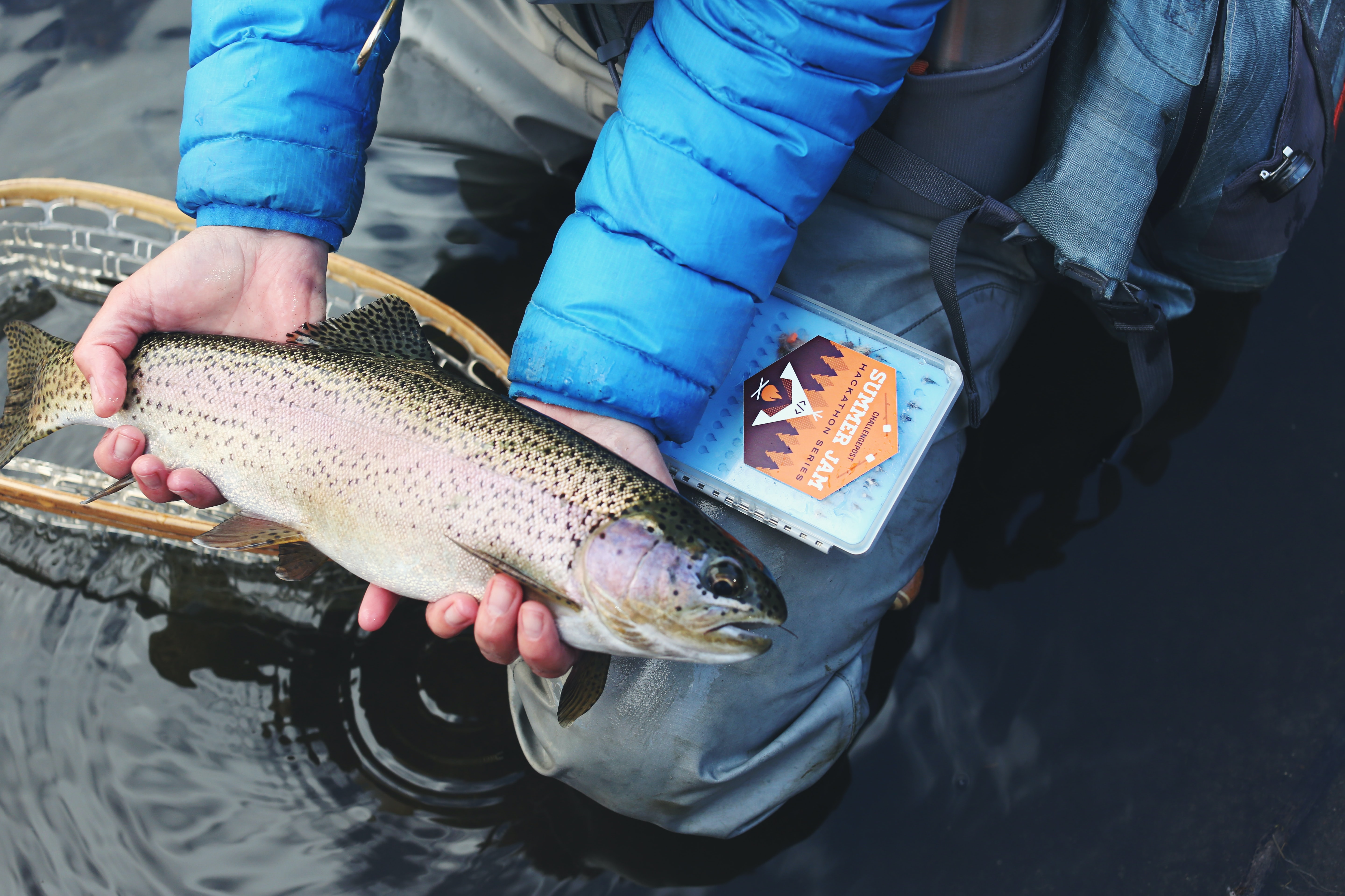person holding gray and beige fish