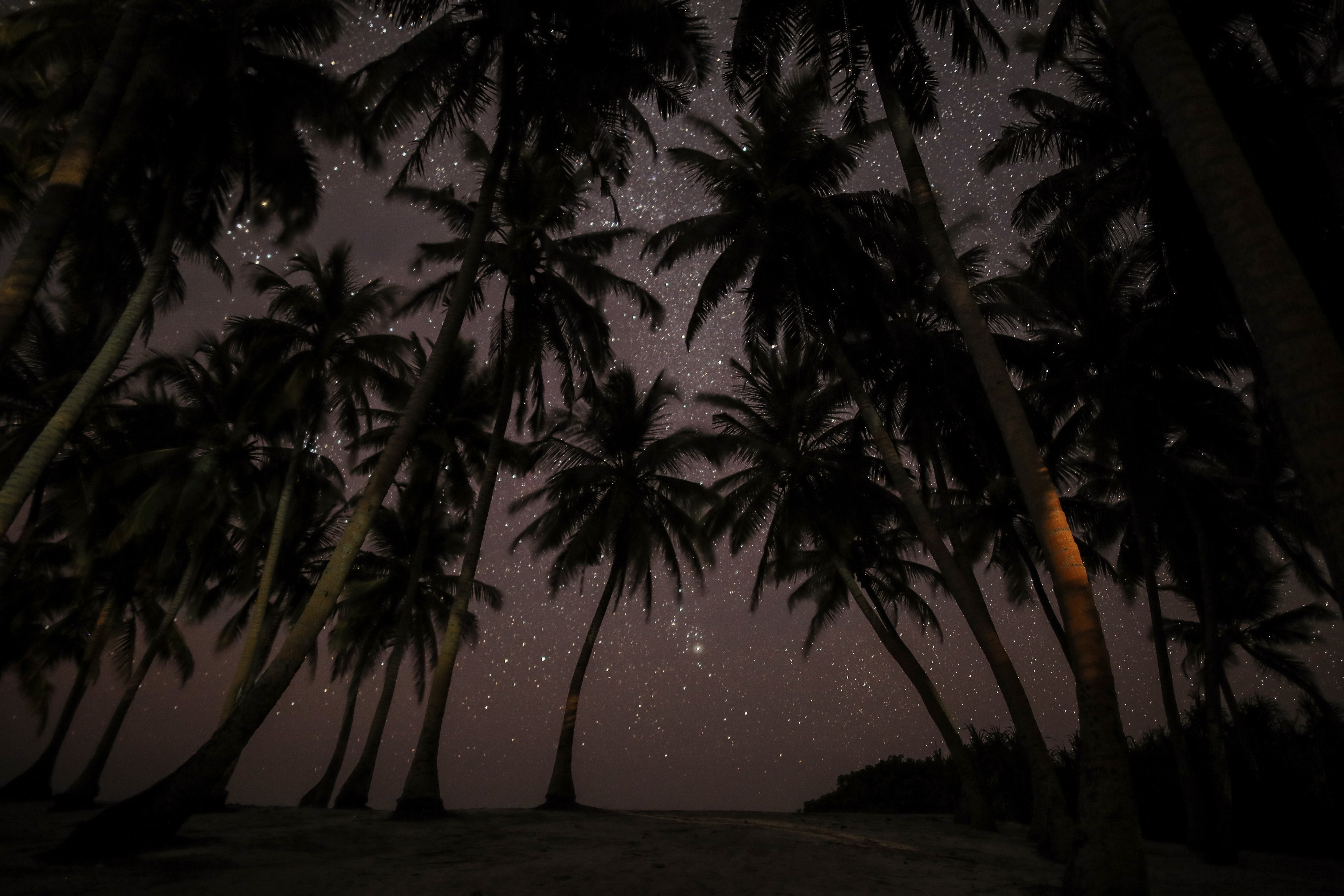 silhouette photography of coconut tress during nighttime