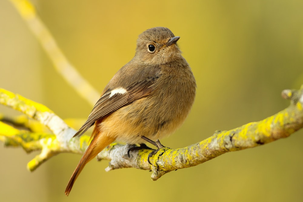 short-beaked brown bird on tree branch