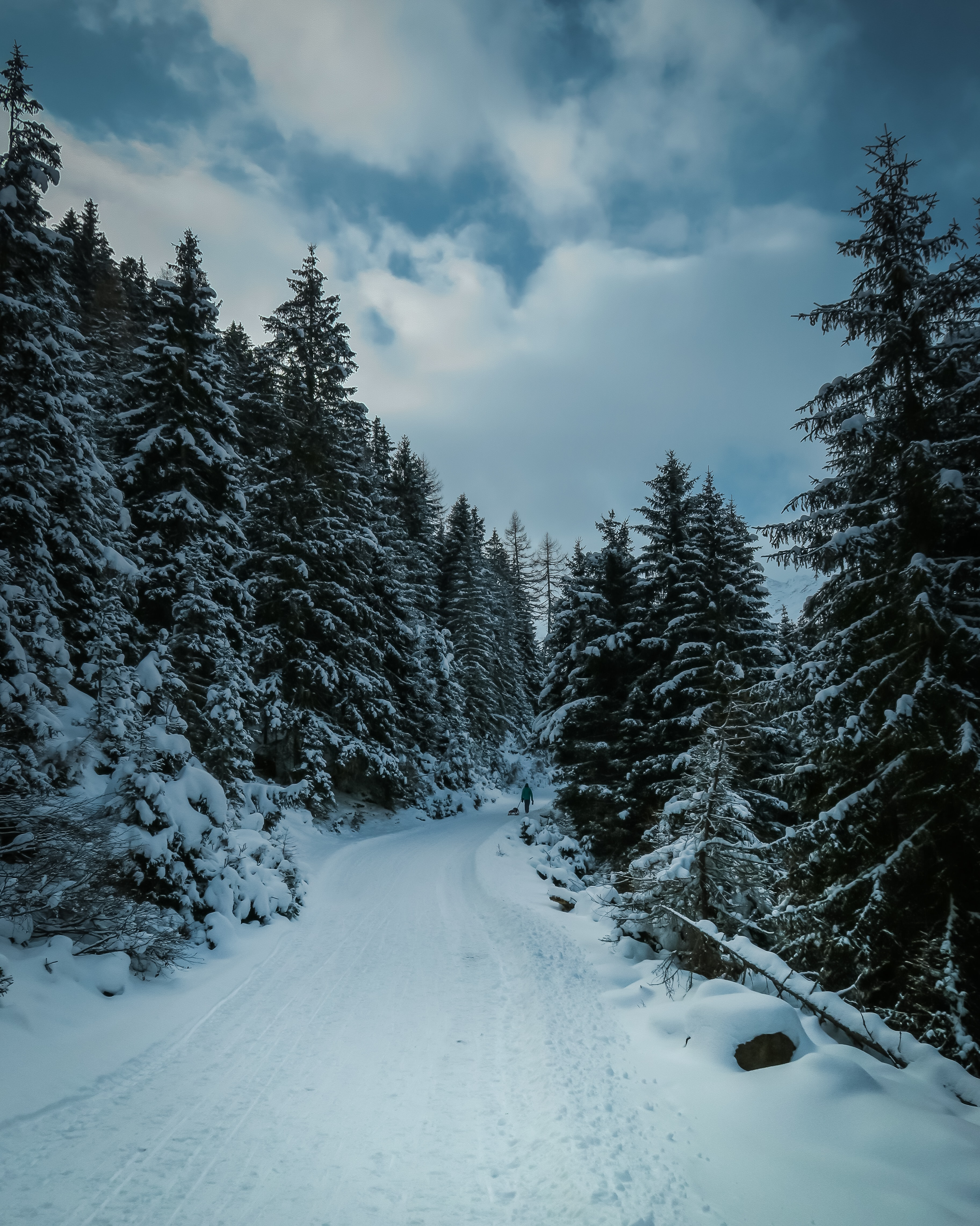 A distant shot of a person walking on a snowy trail through a forest
