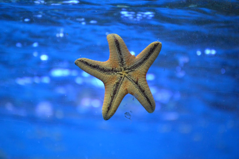 starfish on body of water