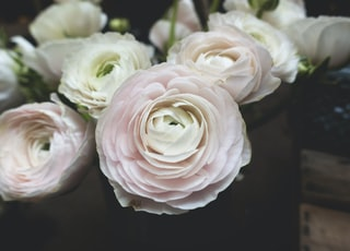 close-up photography of white petaled flower bouquet