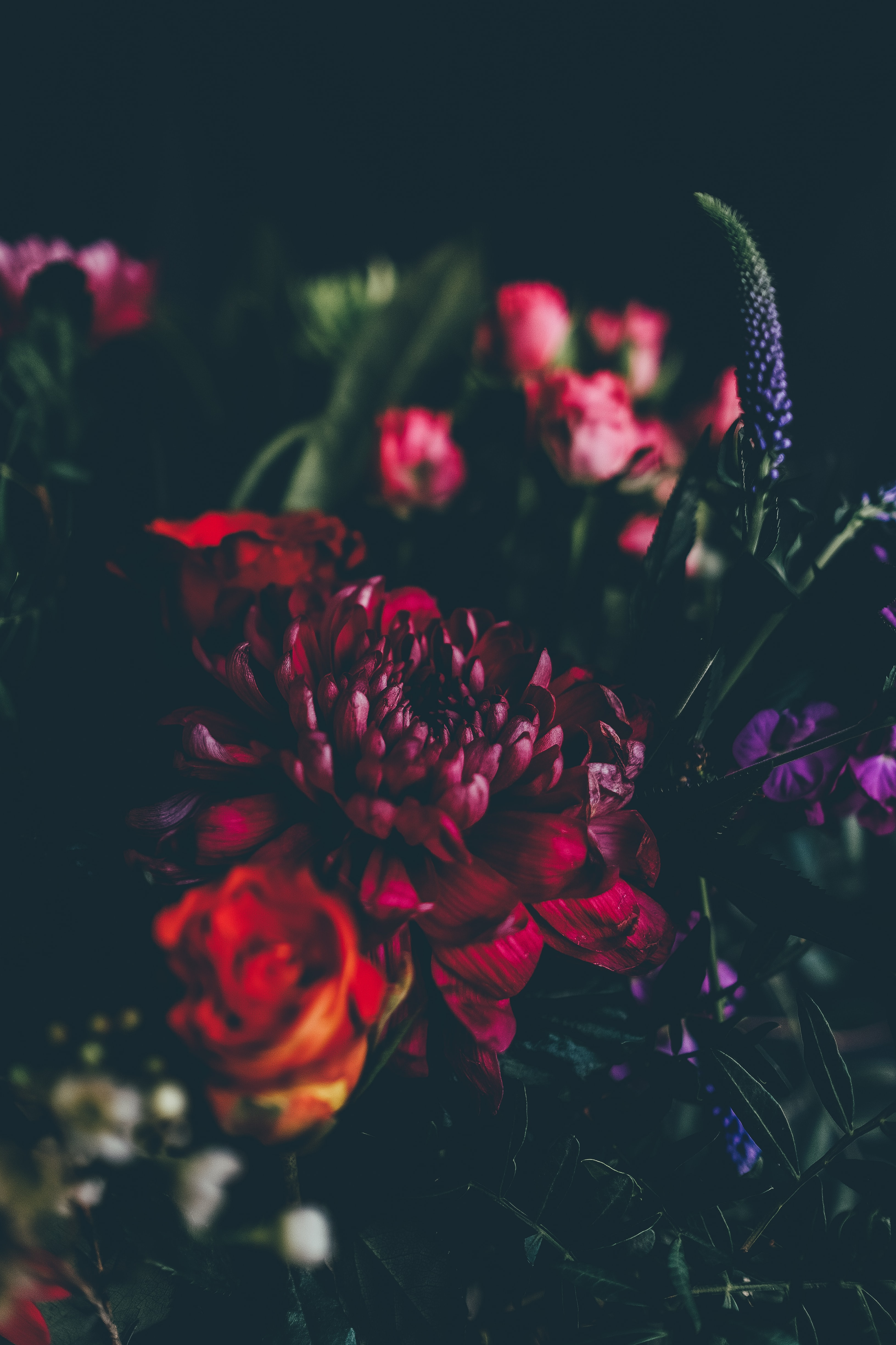 A dim shot of dahlias, roses and other flowers