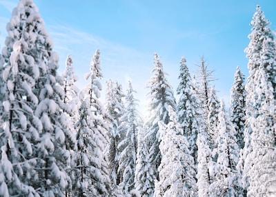 Ein Tag im Schnee