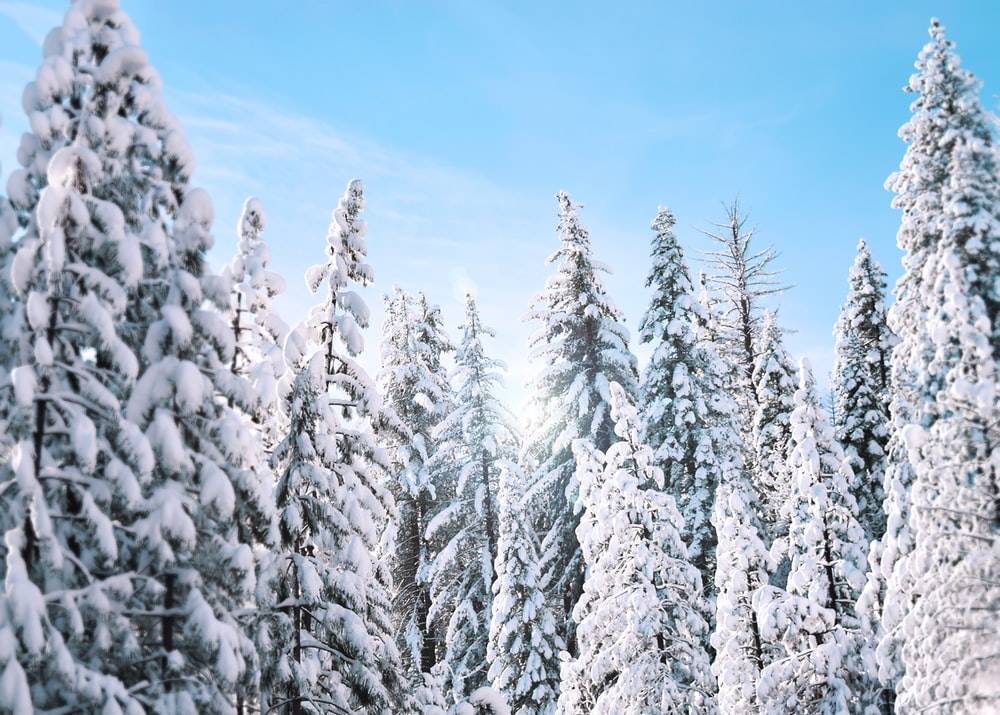 trees filled with snow during daytime