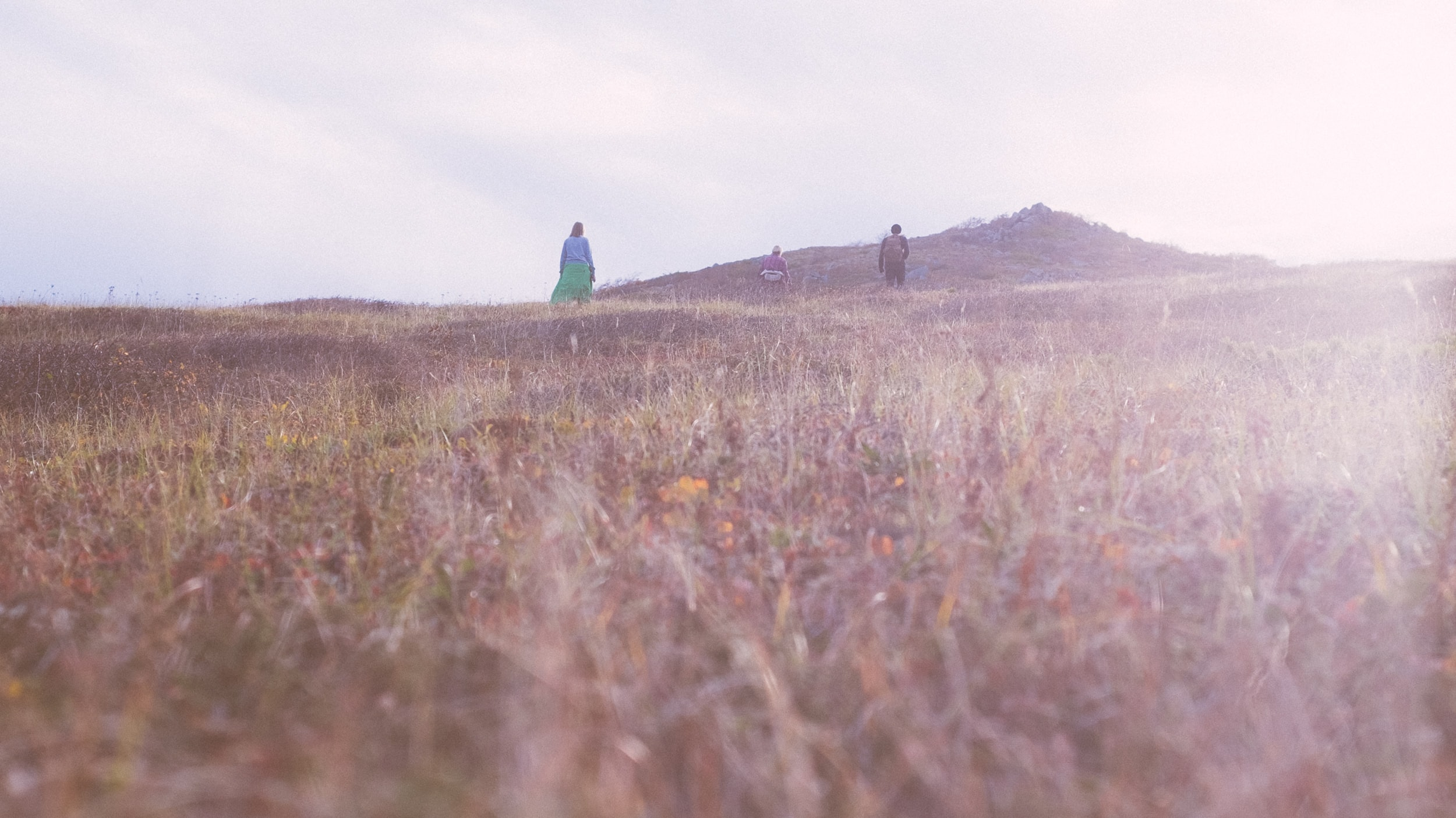 person standing surrounded by grass under cloudy sky
