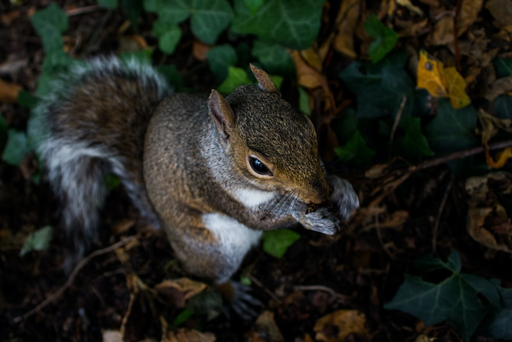 squirrel on ground eating food