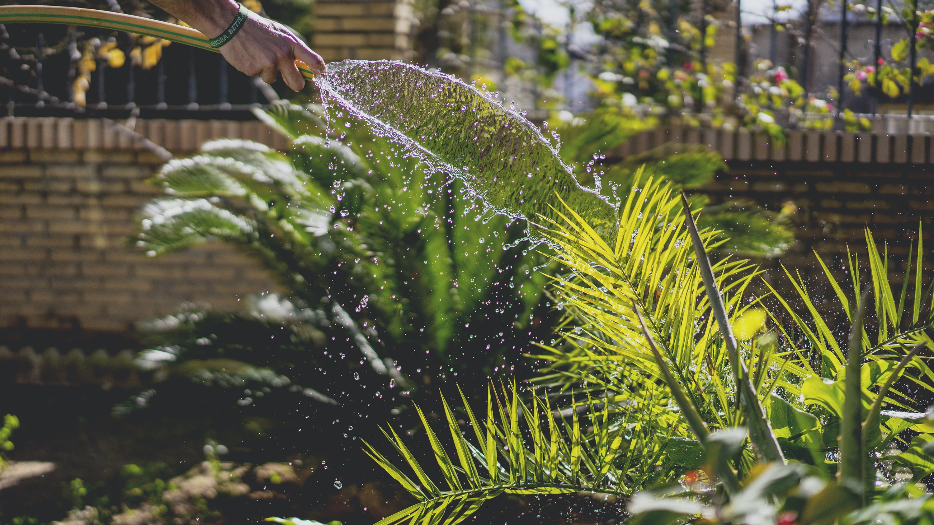 person holding garden hose while watering plant
