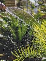 Springtime Gardening Information