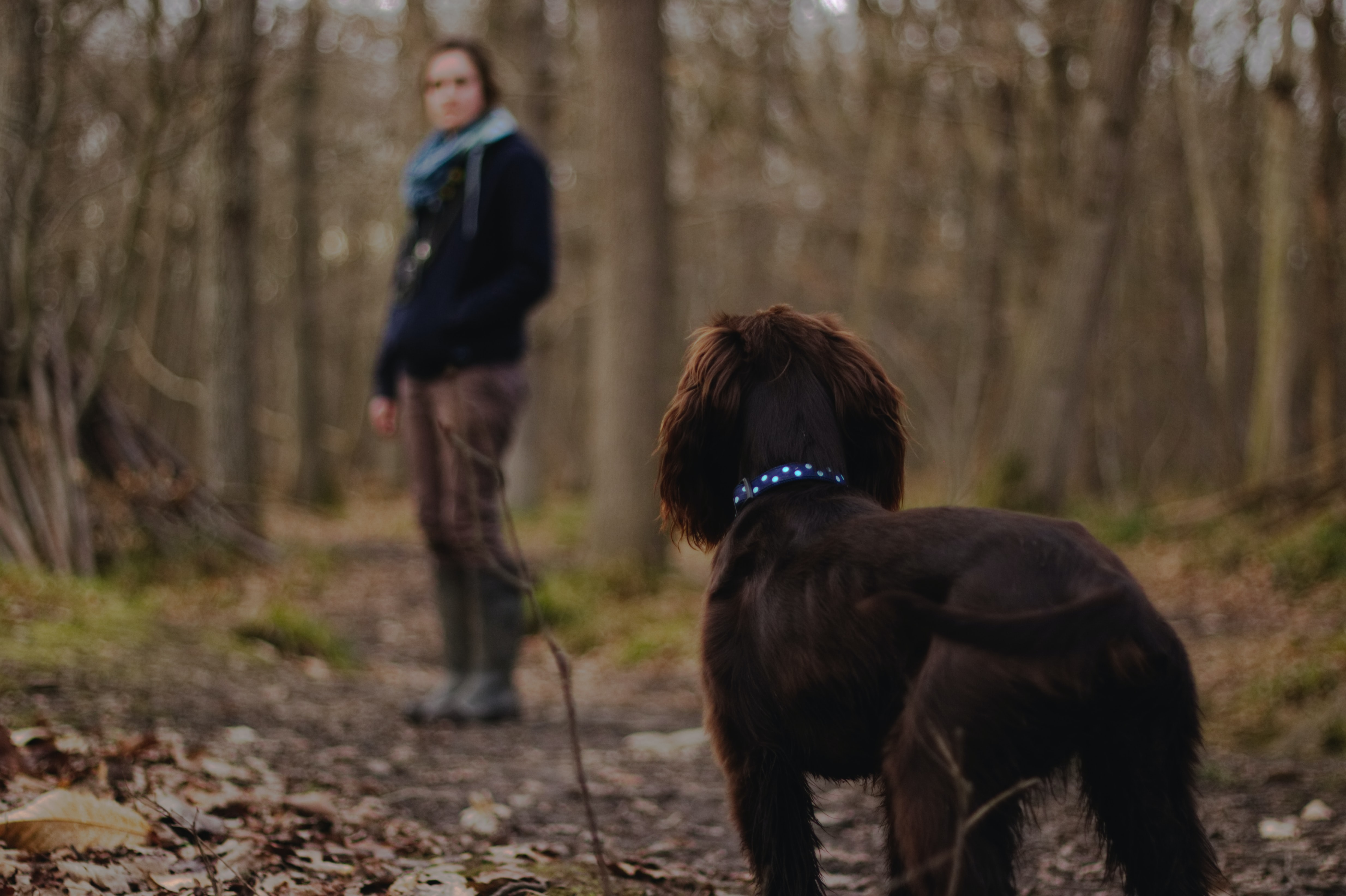 woman looking on brown dog inside the woods photography