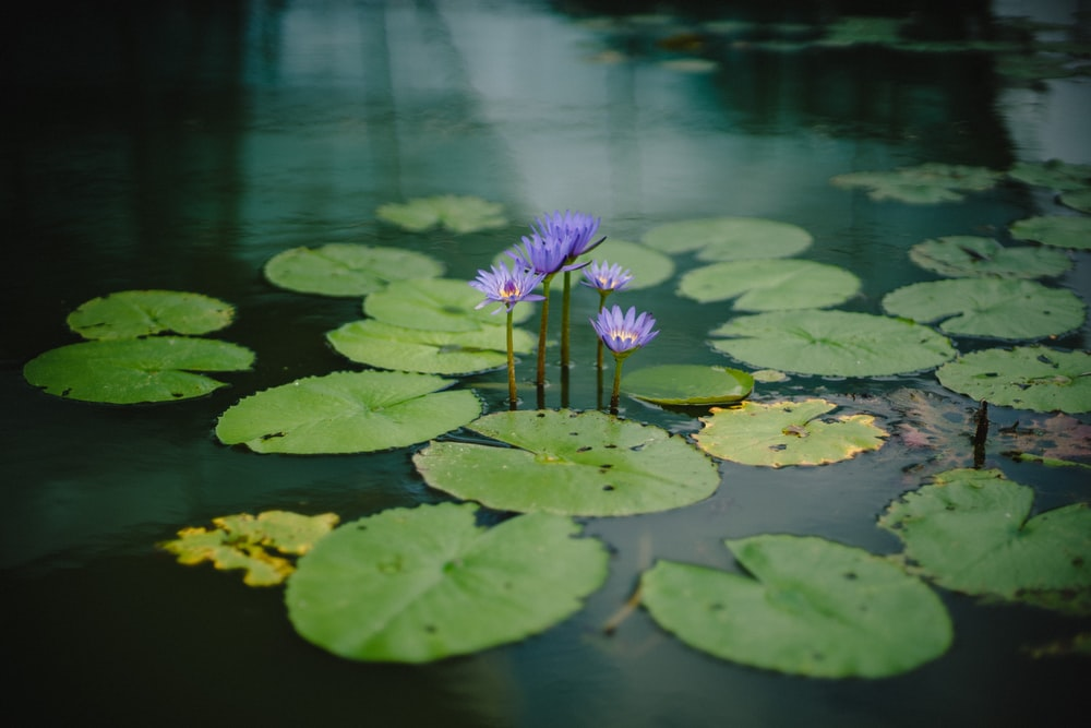 photography of purple petaled flower near body of water during daytime