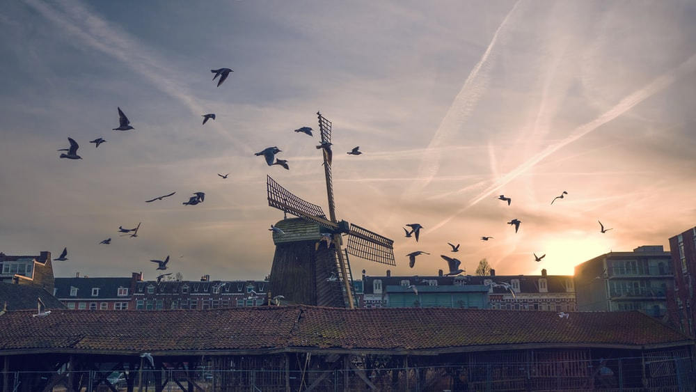 flock of birds flying near windmill