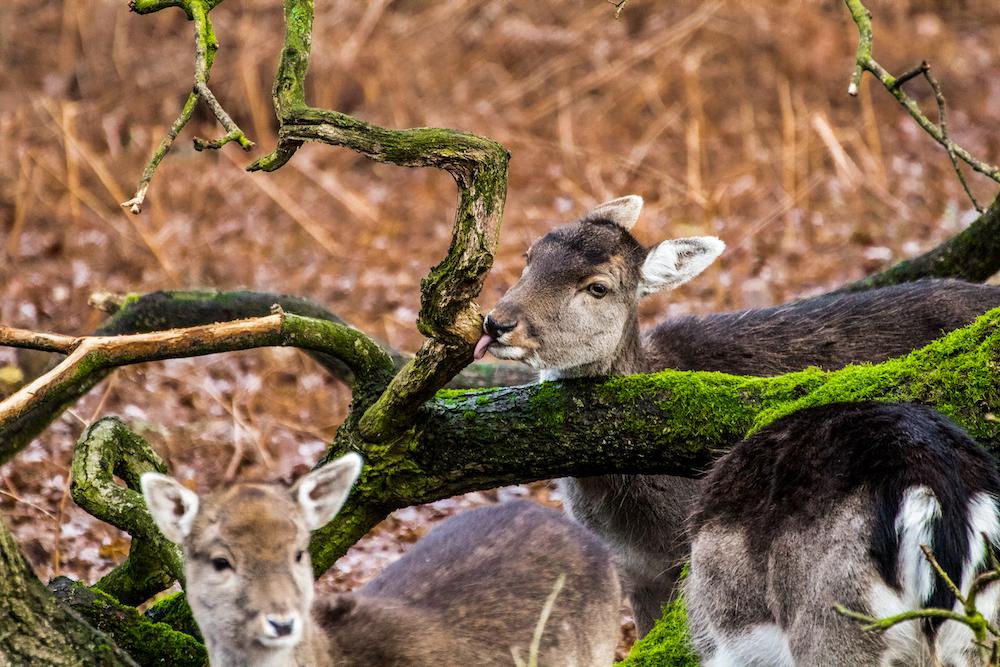 herd of deer near brown tree during daytime