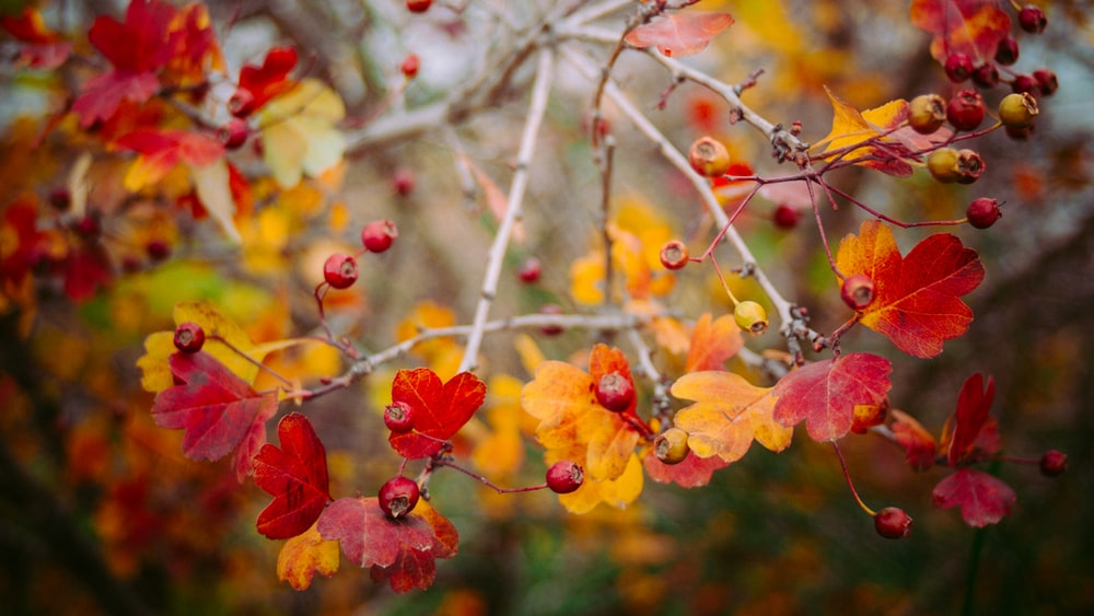 photo of red and yellow flowers