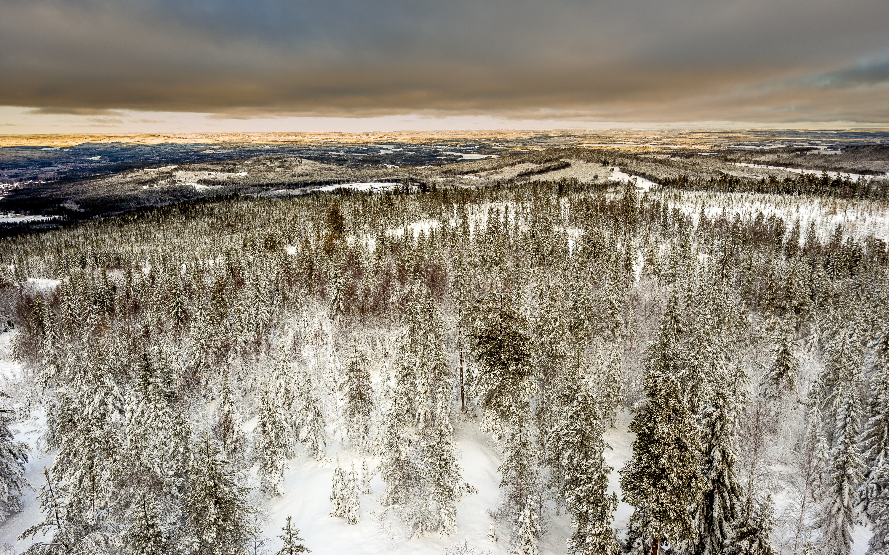 A drone shot taken above a forest during a snowy winter in Hagfors