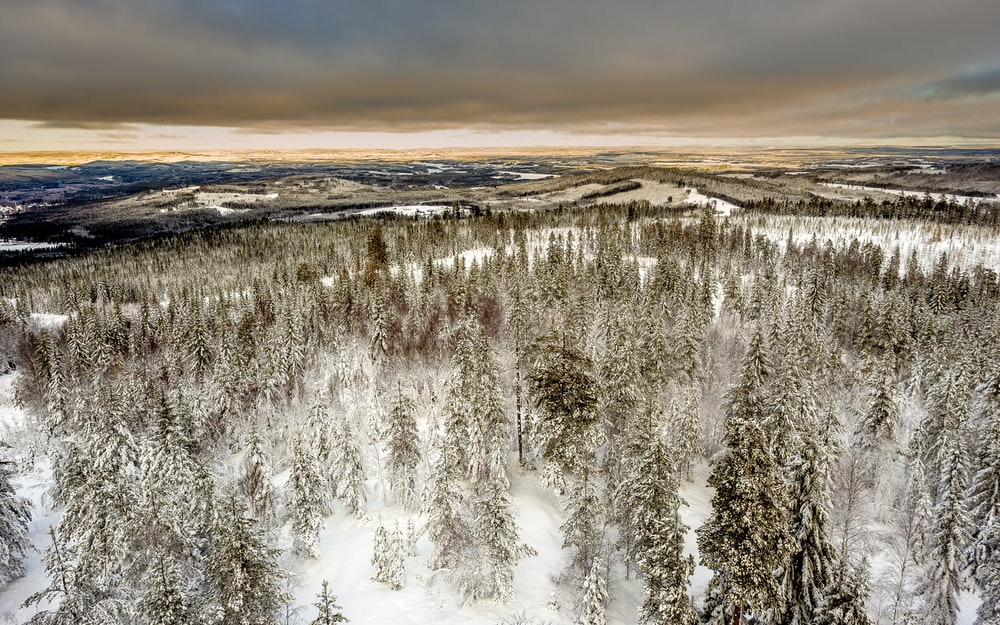 aerial photography of snow covered green leaf trees under cloudy sky