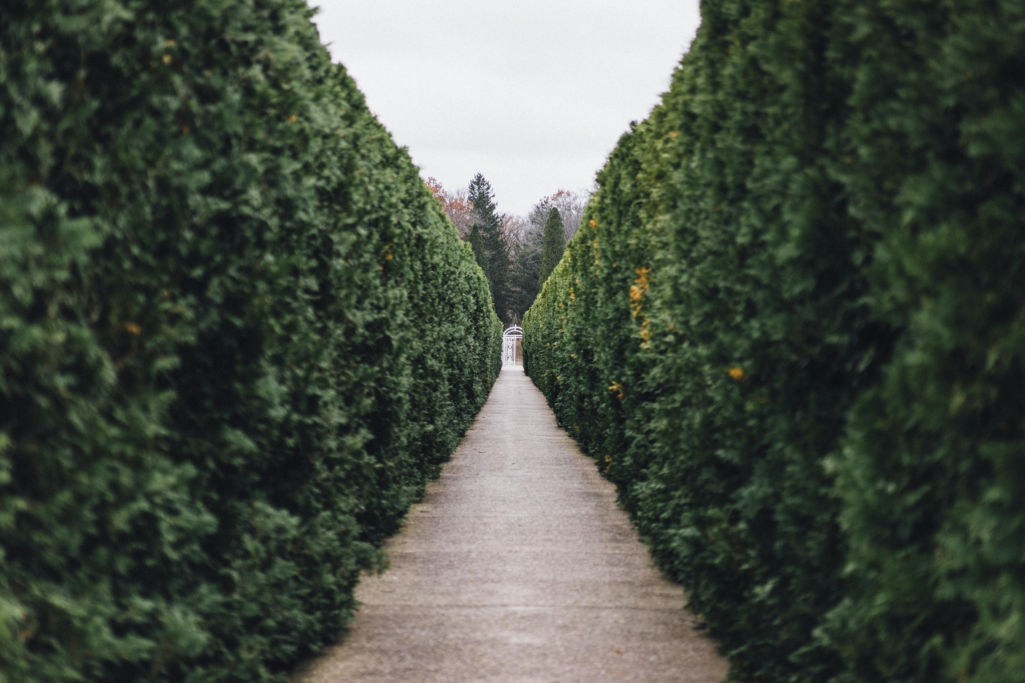 grass maze pathway photo