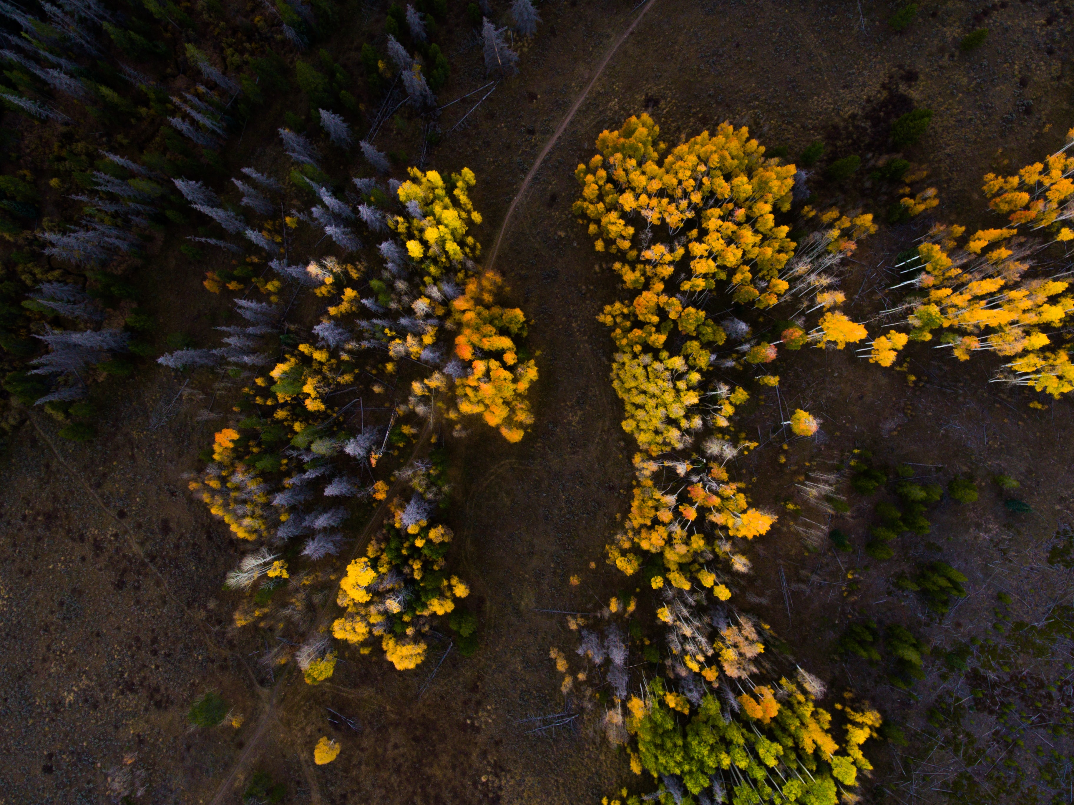 aerial photography of yellow and green leaves tree during daytime