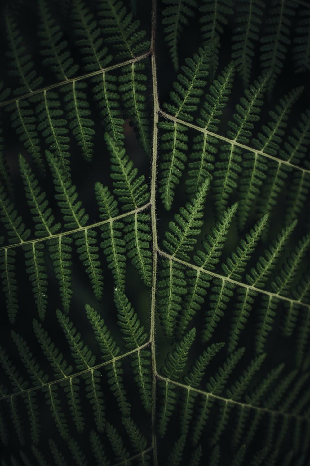 closeup photo of green pine leaf